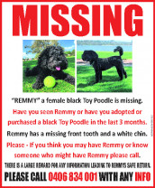 Remmy is Missing